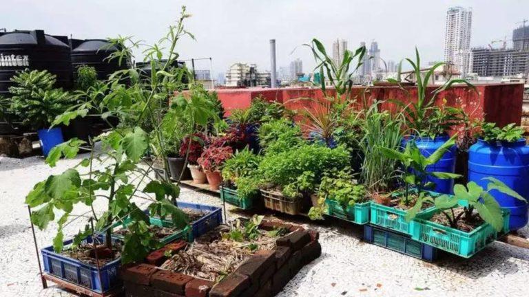 Lady Corona's Plants